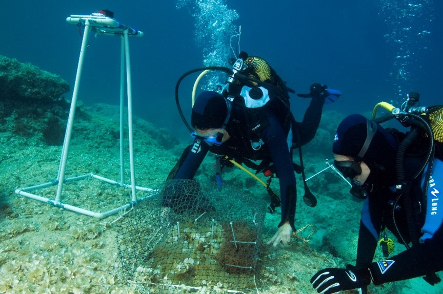 Two divers checking the cover on Cystoseira transplants to test their effectiveness at preventing grazing. Photo: Zafer Kizilkaya.